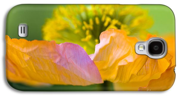 Close Up Floral Galaxy S4 Cases - Iceland Poppy Galaxy S4 Case by Silke Magino