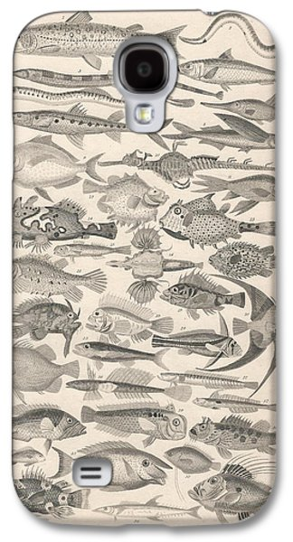 Schools Of Fish Galaxy S4 Cases - Ichthyology Galaxy S4 Case by Captn Brown