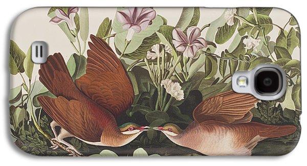 Leaf Drawings Galaxy S4 Cases - Key West dove Galaxy S4 Case by John James Audubon