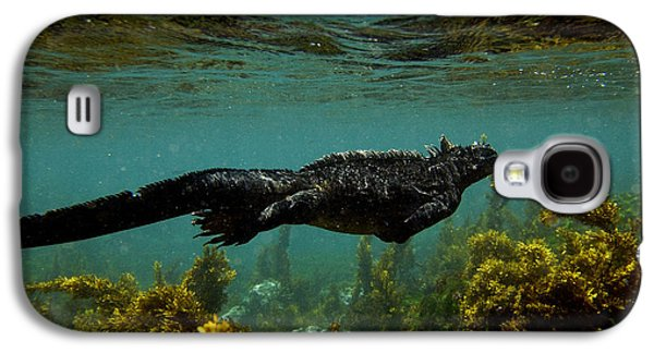 Alga Galaxy S4 Cases - Marine Iguana Amblyrhynchus Cristatus Galaxy S4 Case by Pete Oxford