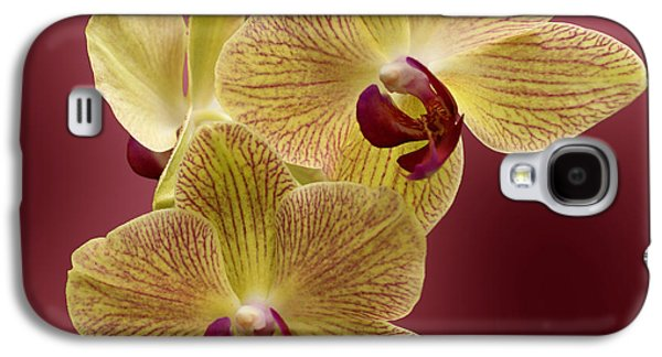 Indiana Flowers Galaxy S4 Cases - Orchid Galaxy S4 Case by Sandy Keeton