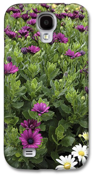 Prescott Photographs Galaxy S4 Cases - Osteospermum flowers Galaxy S4 Case by Erin Paul Donovan