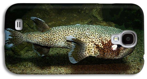 Porcupine Fish Galaxy S4 Case by Aivar Mikko