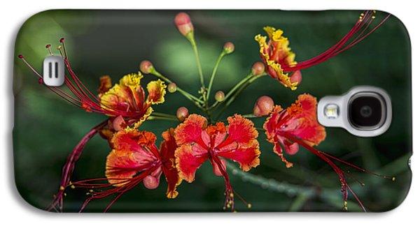 Close Focus Nature Scene Galaxy S4 Cases - Pride Of Barbados  Caesalpinia Galaxy S4 Case by F. M. Kearney