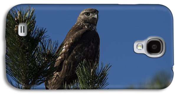 Red Tail Hawk Galaxy S4 Cases - Red Tailed Hawk Galaxy S4 Case by Noah Bryant