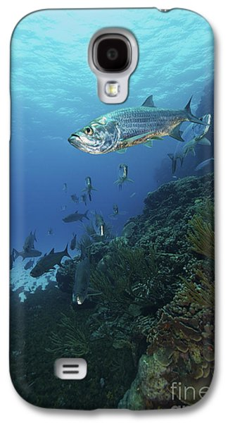 Schools Of Fish Galaxy S4 Cases - School Of Tarpon, Bonaire, Caribbean Galaxy S4 Case by Terry Moore