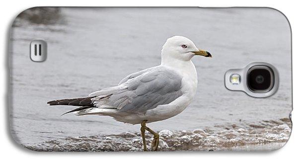 Foggy Ocean Galaxy S4 Cases - Seagull on foggy beach Galaxy S4 Case by Elena Elisseeva