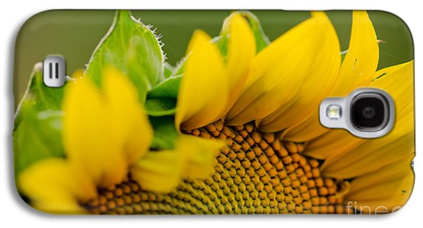 Sun Galaxy S4 Cases - Sun Drenched Galaxy S4 Case by Nick  Boren