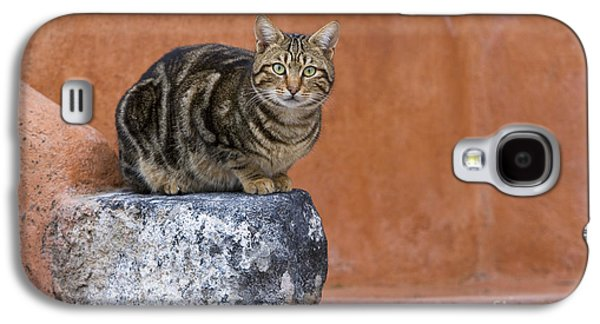 Gray Tabby Galaxy S4 Cases - Tabby Cat On A Greek Island Galaxy S4 Case by Jean-Louis Klein & Marie-Luce Hubert
