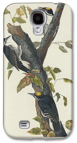 Three-toed Woodpecker Galaxy S4 Case by John James Audubon
