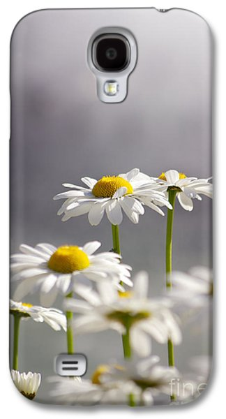 Concept Photographs Galaxy S4 Cases - White Daisies Galaxy S4 Case by Carlos Caetano