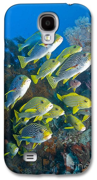 Undersea Photography Galaxy S4 Cases - Yellow And Blue Striped Sweeltip Fish Galaxy S4 Case by Mathieu Meur