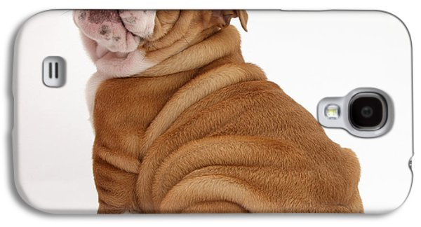 House Pet Galaxy S4 Cases - Bulldog Pup Galaxy S4 Case by Mark Taylor