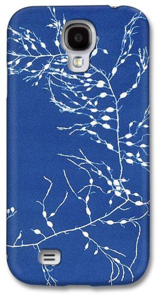 Alga Galaxy S4 Cases - 19th-century Alga Cyanotype Galaxy S4 Case by Spencer Collectionnew York Public Library