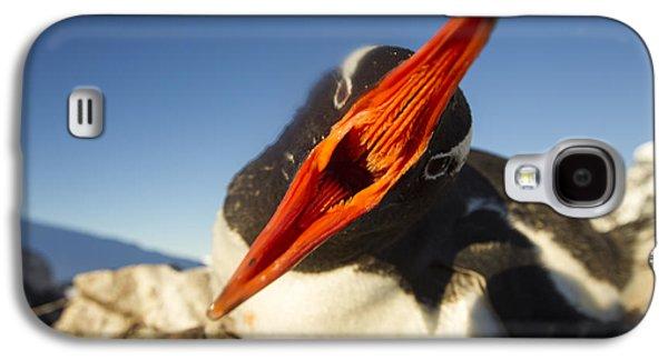 Close Focus Nature Scene Galaxy S4 Cases - Antarctica, Petermann Island, Gentoo Galaxy S4 Case by Paul Souders