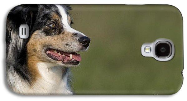 Australian Open Galaxy S4 Cases - Australian Shepherd Galaxy S4 Case by Jean-Louis Klein & Marie-Luce Hubert