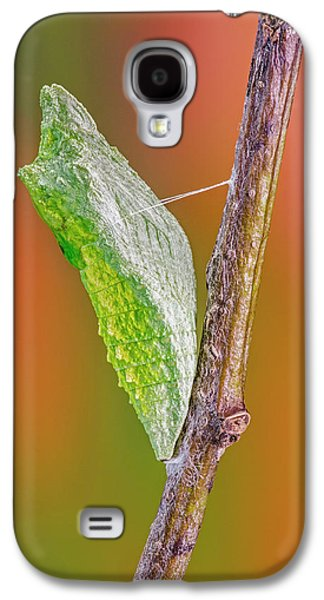 Black Swallowtail Butterfly Caterpillar II Galaxy S4 Case by Susan Candelario