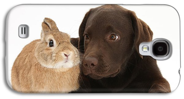 Domesticated Animals Galaxy S4 Cases - Chocolate Lab & Netherland-cross Rabbit Galaxy S4 Case by Mark Taylor