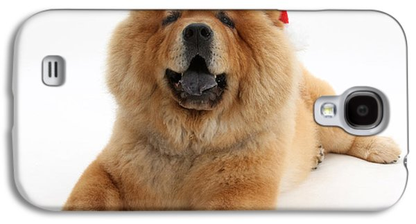 House Pet Galaxy S4 Cases - Christmas Dog Galaxy S4 Case by Mark Taylor