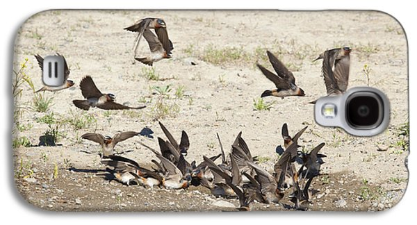 Mud Nest Galaxy S4 Cases - Cliff Swallows Gather Mud Galaxy S4 Case by Marie Read