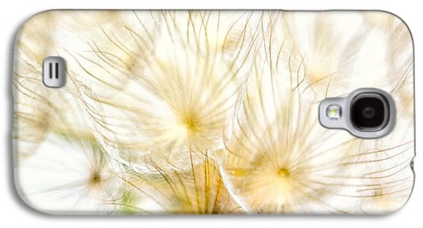 Close Focus Floral Galaxy S4 Cases - Dandelion Galaxy S4 Case by Stylianos Kleanthous