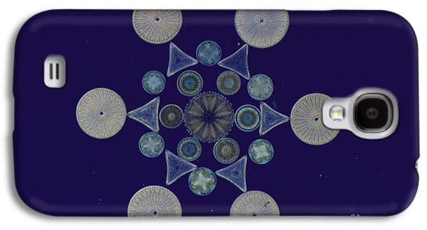 Frustule Galaxy S4 Cases - Diatom Arrangement Galaxy S4 Case by M. I. Walker