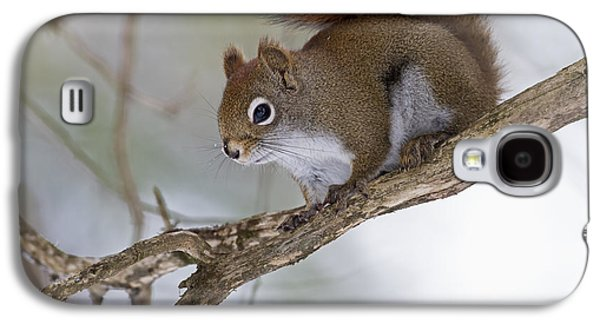 Eastern Grey Squirrel  Sciurus Galaxy S4 Case by Philippe Henry