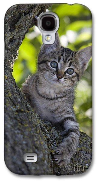 Gray Tabby Galaxy S4 Cases - Kitten In A Tree Galaxy S4 Case by Jean-Louis Klein & Marie-Luce Hubert