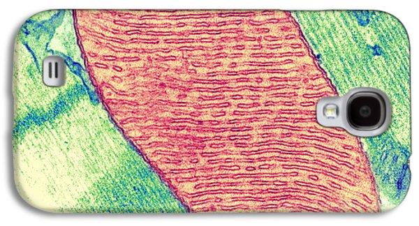 Tem Galaxy S4 Cases - Mitochondrion, Tem Galaxy S4 Case by Thomas Deerinck, Ncmir
