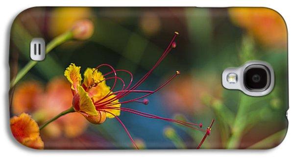Pride Of Barbados  Caesalpinia Galaxy S4 Case by F. M. Kearney