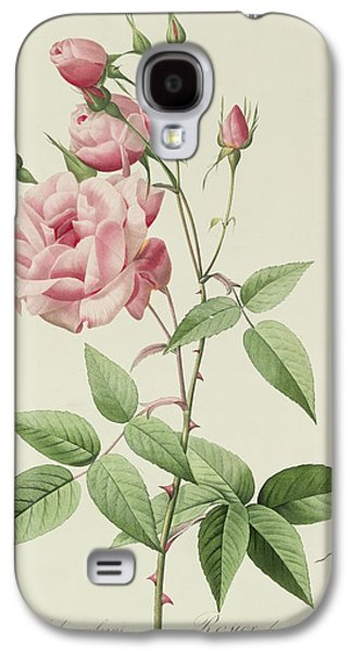 Nature Study Drawings Galaxy S4 Cases - Rosa Indica Vulgaris Galaxy S4 Case by Pierre Joseph Redoute