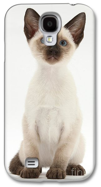 Domesticated Animals Galaxy S4 Cases - Siamese Kitten Galaxy S4 Case by Mark Taylor