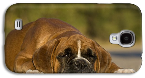 Boxer Galaxy S4 Cases - Sleepy Boxer Puppy Galaxy S4 Case by Jean-Louis Klein & Marie-Luce Hubert