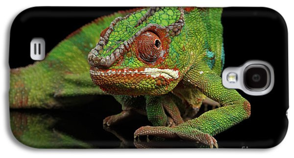 Sneaking Panther Chameleon, Reptile With Colorful Body On Black Mirror, Isolated Background Galaxy S4 Case by Sergey Taran