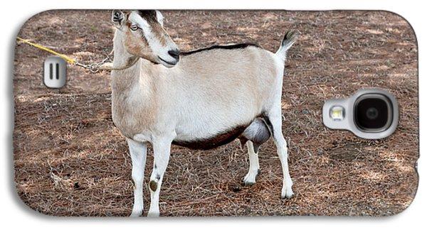 Uc Davis Galaxy S4 Cases - Transgenic Goat Galaxy S4 Case by Inga Spence