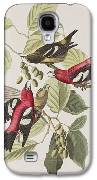 Feather Drawings Galaxy S4 Cases - White-winged Crossbill Galaxy S4 Case by John James Audubon