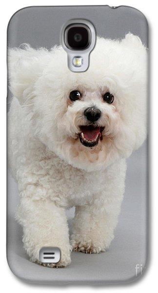 House Pet Galaxy S4 Cases - Bichon Frise Galaxy S4 Case by Jane Burton
