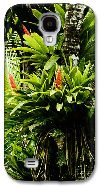 Epiphyte Galaxy S4 Cases - Bromeliads El Yunque National Forest Galaxy S4 Case by Thomas R Fletcher