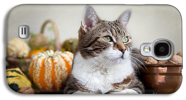 Studio Photographs Galaxy S4 Cases - Cat and Pumpkins Galaxy S4 Case by Nailia Schwarz