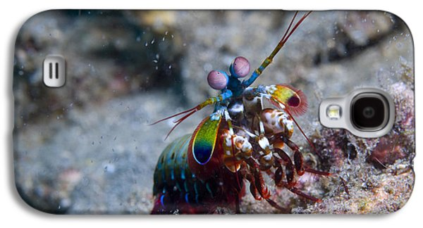 New Britain Galaxy S4 Cases - Close-up View Of A Mantis Shrimp, Papua Galaxy S4 Case by Steve Jones