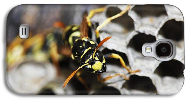 Common Wasp Vespula Vulgaris Galaxy S4 Case by Gerard Lacz