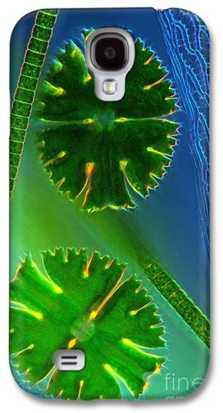 Plankton Galaxy S4 Cases - Desmids near Sphagnum leaf LM Galaxy S4 Case by Marek Mis
