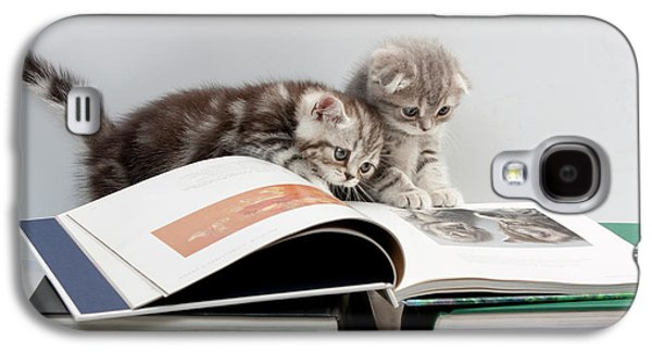 Scottish Fold Cats Galaxy S4 Case by Evgeniy Lankin