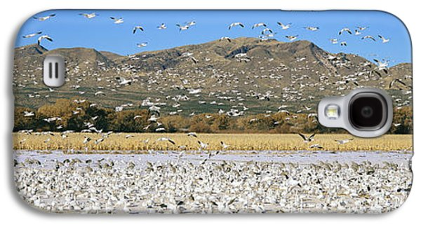 Wildlife Refuge. Galaxy S4 Cases - A Panoramic Of Thousands Of Migrating Galaxy S4 Case by Panoramic Images