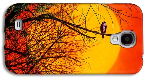 Sun Galaxy S4 Cases - Out On A Limb Galaxy S4 Case by Brian Stevens