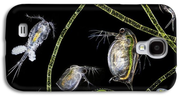 Plankton Galaxy S4 Cases - Pond Life Galaxy S4 Case by Laguna Design