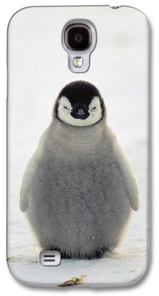 Baby Bird Photographs Galaxy S4 Cases - Emperor Penguin Aptenodytes Forsteri Galaxy S4 Case by Konrad Wothe