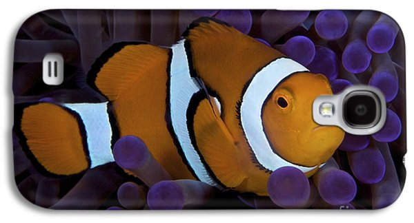 Undersea Photography Galaxy S4 Cases - False Ocellaris Clownfish In Its Host Galaxy S4 Case by Terry Moore