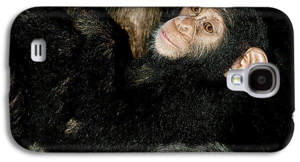 Chimpanzee Pan Troglodytes Galaxy S4 Case by Gerard Lacz