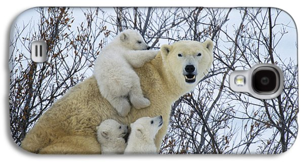 Polar Bear And Cubs Galaxy S4 Case by Jean-Louis Klein and Marie-Luce Hubert